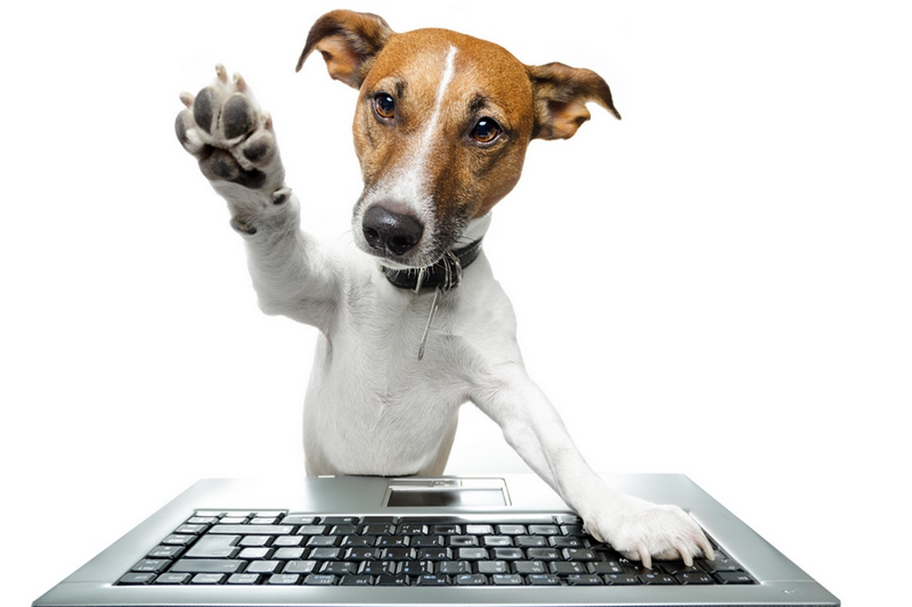San Diego Animal Hospital Veterinarian IT Computer Support Services